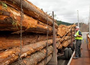 Cedar-Logs-sm
